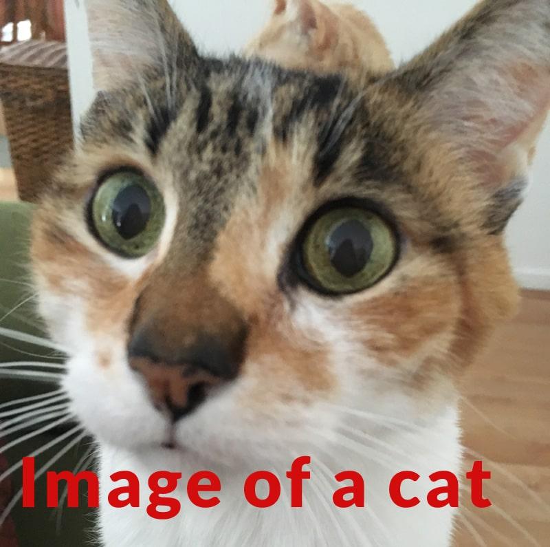 Hình ảnh chứng minh kích thước hình ảnh phải lớn hơn bao nhiêu để phù hợp với từ ngữ trên hình ảnh